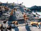 6 भयानक आणि विचित्र आयलँड, आहेत खास अॅडव्हेंचर ट्रिपसाठी प्रसिध्द...| - Divya Marathi