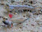 जाणून घ्या या चमत्कारी माशाविषयी, तो पाण्याबाहेरही जिवंत राहू शकतो| - Divya Marathi