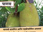 खात राहावे लसुण आणि हे 9 पदार्थ, डायबिटीज राहिल नियंत्रित...|जीवन मंत्र,Jeevan Mantra - Divya Marathi