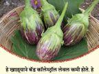 पावसाळ्यात वांगी खाल्ल्याने फंगल इन्फेक्शन होते दूर, असेच 12 फायदे...|जीवन मंत्र,Jeevan Mantra - Divya Marathi