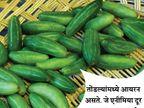 हा पदार्थ खाल्ल्याने दूर होईल किडनी स्टोन, असेच 10 फायदे...| - Divya Marathi