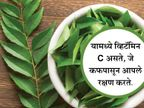 दररोज अवश्य खावा कडीपत्ता, होतील हे 10 खास फायदे|जीवन मंत्र,Jeevan Mantra - Divya Marathi