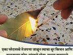 तेजपत्त्याने दूर करा उंदीर आणि झुरळं, हे आहे तुमच्या कामाचे 11 घरगुती उपाय...| - Divya Marathi