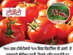 खावेत हे 10 पदार्थ, कमी होईल डेंग्यूमुळे होणा-या मृत्यूच्या धोका...|जीवन मंत्र,Jeevan Mantra - Divya Marathi
