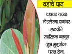 उपाय : नवरात्रीमध्ये या 10 मधून 1 वस्तू घरी आणल्याने नष्ट होते गरीबी... ज्योतिष,Jyotish - Divya Marathi