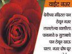 शास्त्र : नवरात्र नवमीला करा, 9 समस्या दूर करण्यासाठी पानाचे 9 उपाय...|धर्म,Dharm - Divya Marathi