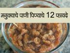 रोज सकाळी उपाशीपोटी प्यावे मनुक्याचे पाणी, होतील 12 फायदे...|जीवन मंत्र,Jeevan Mantra - Divya Marathi