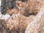 पुरुषांसाठी विशेष शक्तीवर्धक ठरतील हे 5 पदार्थ, हिवाळ्यात अवश्य खावेत|जीवन मंत्र,Jeevan Mantra - Divya Marathi