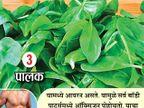 स्पर्म काउंट वाढवण्यासाठी पुरुषांनी काय खावे, काय खाऊ नये? 10 टिप्स|जीवन मंत्र,Jeevan Mantra - Divya Marathi