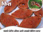 डेंग्यूपासून दूर ठेवतील हे 10 पदार्थ, टळेल मृत्यूचा धोका... जीवन मंत्र,Jeevan Mantra - Divya Marathi