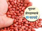 शेंगदाणे आहेत गरिबांचे बदाम, रोज थोडेसे खाल्ल्याने होतील हे 10 मोठे फायदे|जीवन मंत्र,Jeevan Mantra - Divya Marathi