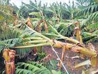 भूम, उमरग्याला वादळाचा तडाखा; केळीची बाग भुईसपाट, अनेक घरांवरील पत्रे उडाले औरंगाबाद,Aurangabad - Divya Marathi