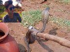 साप चावल्याने युवकाचा मृत्यू; तंत्र-मंत्राने पुन्हा जिवंत करण्याच्या उद्देशाने सापाला केले कैद|देश,National - Divya Marathi