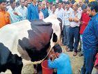कमी प्रोटीन्सच्या कारणावरून अधिकाऱ्यांनी नाकारले दूध, तर मुंबईच्या पथकासमोरच बँड लावून धार काढली औरंगाबाद,Aurangabad - Divya Marathi