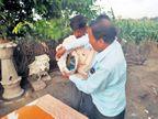 DvM Special : जखमी माेराचा शेतकऱ्याने २५ तास सांभाळ करत घरगुती उपचार केला अन् वन विभागाच्या कर्मचाऱ्याने गोणीत कोंबला|औरंगाबाद,Aurangabad - Divya Marathi