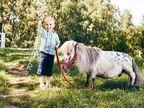 पोलंडमधील जगातील सर्वात लहान घोड्याचे गिनीज बुकमध्ये नाव, ऊंची फक्त 1 फुट 10 इंच| - Divya Marathi