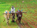 शेतीची खनती : विस्थापितांची गिनती?| - Divya Marathi
