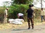 ગુજરાત હાઈકોર્ટનું અવલોકન મરઘીથી સિંહોમાં વાયરસની ફેલાયો, ગેરકાયદેસર લાયન શો અને પજવણીથી નારાજ| - Divya Bhaskar