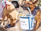 ગ્વાલિયરમાં રેલવે સ્ટેશન, બસ સ્ટેન્ડ પરથી BSFના ડૉગ્સે કચરો ઉઠાવ્યો  - Divya Bhaskar