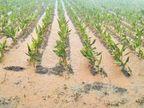 જોડિયાના રણજીતપર ગામમાં બે કલાકમાં સવા ત્રણ ઇંચ વરસાદ જામનગર,Jamnagar - Divya Bhaskar