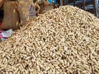 મગફળીનાં ખરીદી કેન્દ્રો પર નિવૃત્ત સૈનિકો તહેનાત રહેશે| - Divya Bhaskar