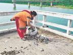 પાટનગરના દપંતીએ સાબરમતી પુલ ઉપરથી પ્લાસ્ટિકના કચરાની સફાઇ કરી|ગાંધીનગર,Gandhinagar - Divya Bhaskar