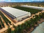 સીવોટર ગ્રીનહાઉસ નામની સંસ્થાએ રણમાં ખારાં પાણીથી ખેતીની નવી ટેક્નીક વિકસાવી| - Divya Bhaskar
