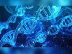 આર્ટિફિશિયલ ઇન્ટેલિજન્સથી આંતરડાનું કેન્સર શોધી શકાશે, પ્રારંભિક તબક્કામાં જ સારવાર મળી જશે|હેલ્થ,Health - Divya Bhaskar