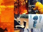 ભીષણ આગથી અબોલ પ્રાણીઓ બેહાલ  - Divya Bhaskar