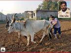 ઓર્ગેનિક ખેતી કરી વાર્ષિક રૂ. 1.25 કરોડ કમાય છે આણંદના IT એન્જિનિયર દેવેશ પટેલ, કોરોનામાં ઇમ્યુનિટી વધારતી હળદરની કેપ્સ્યૂલ બનાવી|બિઝનેસ,Business - Divya Bhaskar