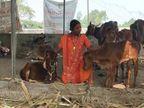 બોટાદ જિલ્લાના એક રત્નકલાકારે કિન્નરનો ભેખ ધારણ કરી નિરાધાર ગાયોની સેવા કરે છે, ગાયોના જીવ બચાવવા દિવસ-રાત મહેનત કરે છે|ભાવનગર,Bhavnagar - Divya Bhaskar
