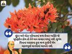 સુંદર અને વિશાળ પરિવારમાં જન્મ લેનાર વ્યક્તિ જો બુદ્ધિહીન હોય તો તેને માન-સન્માન મળતું નથી|ધર્મ,Dharm - Divya Bhaskar