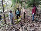 ડાંગમાં 14 કાગડાના મોત, વઘઇમાં 12 અને સાકરપાતળમાં 2 કાગડાના મૃત્યુ થતાં તંત્રની દોડધામ, મૃતદેહના સેમ્પલ ભોપાલ લેબોરેટરીમાં મોકલાયા|આહવા,Ahwa - Divya Bhaskar