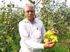 ત્રણ વર્ષ અગાઉ પરંપરાગત ખેતી છોડી થાઇ એપલ બોરની બાગાયતી ખેતી શરૂ કરી, હવે વર્ષે રૂપિયા 40 લાખની કમાણી કરે છે|ઓરિજિનલ,DvB Original - Divya Bhaskar