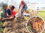 4 એકર જમીન લીઝ પર લઈને પિતા-દીકરી ઓર્ગેનિક ખેતી કરી રહ્યાં છે, પ્રોડક્ટને સીધી કસ્ટમર સુધી પહોંચાડી રહ્યાં છે|ઓરિજિનલ,DvB Original - Divya Bhaskar