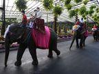 બેંગકોકમાં વેલેન્ટાઈન ડે પર 52 કપલ્સે હાથી પર સવાર થઈમેરેજ કર્યા લાઇફસ્ટાઇલ,Lifestyle - Divya Bhaskar