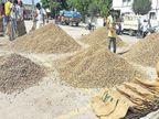 ચણાની ટેકાના ભાવે 50 મણ ખરીદી સામે કિસાન સંઘ નારાજ, કહ્યું- મોંઘવારીને ધ્યાને રાખી સરકારે ખેડૂતો પાસેથી 200 મણ ખરીદી કરવી જોઈએ|રાજકોટ,Rajkot - Divya Bhaskar