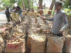 વિજાપુરમાં બટાકાનું મબલખ ઉત્પાદન તો થયું, પણ આ વર્ષે 60થી 150 રૂ. ભાવ મળતા ખેડૂતો નિરાશ વિજાપુર,Vijapur - Divya Bhaskar