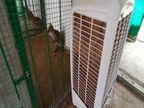 કેવડિયા જંગલ સફરીમાં પ્રાણીઓ માટેે AC મુકાયા|કેવડિયા,Kevadia - Divya Bhaskar