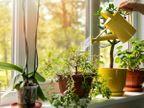 આ ઓવરસાઈઝ્ડ હાઉસ પ્લાન્ટ્સ ઘરનું ડેકોરેશન વધારશે અને ઠંડું પણ રાખશે, લોબીમાં પોટેડ બામ્બુ વાવો અને તડકો આવતો હોય ત્યાં રબર ટ્રી પ્લાન્ટ રાખો|લાઇફસ્ટાઇલ,Lifestyle - Divya Bhaskar