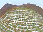 3 વર્ષમાં 75 હજાર ચો. મીટર જમીન લીલીછમ કરી: પથ્થર નહીં, ચાલુ કારે ઉડતો કાચબો અથડાયો!; લેહ-મનાલી હાઈવે બંધ|વર્લ્ડ,International - Divya Bhaskar