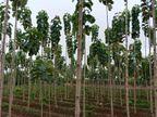 30 વર્ષીય વ્યક્તિને જંગલમાંથી સાગનાં બે વૃક્ષ કાપવાની સજા બદલ ફોરેસ્ટ ડીપાર્ટમેન્ટે 1.20 કરોડ રૂપિયાનો દંડ ફટકાર્યો|લાઇફસ્ટાઇલ,Lifestyle - Divya Bhaskar