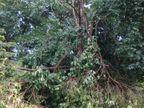 વિજાપુર, બિલખા, ડુંગરપુર વિસ્તારમાં વાવાઝોડું ફૂંકાયું|જુનાગઢ,Junagadh - Divya Bhaskar