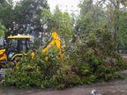 હવે અમદાવાદનો વારો, બપોરે 3 વાગ્યે અહીંથી તાઉ-તે વાવાઝોડું પસાર થશે, અમરેલીના રાજુલામાં ભારે તારાજી, 200થી વધુ વૃક્ષો ધરાશાયી|અમરેલી,Amreli - Divya Bhaskar