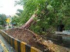 જિલ્લામાં 462 મિલકતને નુકસાન, 400 વૃક્ષ ધરાશય, ઓલપાડ તાલુકામાં 5 ઇંચ વરસાદ|બારડોલી,Bardoli - Divya Bhaskar
