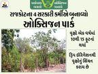રાજકોટમાં 4 સરકારી કર્મચારી ઓક્સિજનમેન બન્યા, 2 વીઘા પડતર જમીનમાં 3500 વૃક્ષ વાવ્યાં, જીવની જેમ જતન કરે છે|રાજકોટ,Rajkot - Divya Bhaskar