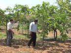 વડગામની 10 એકરમાં ફેલાયેલી આયુર્વેદિક હોસ્પિટલના કેપ્સમાં 60 પ્રકારના વૃક્ષો, પાંચ વર્ષમાં 500 રોપાનું વાવેતર|પાલનપુર,Palanpur - Divya Bhaskar