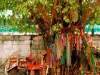 અપરા એકાદશીએ પીપળાના ઝાડની પૂજા કરવાની પરંપરા, આ વ્રતની કથા પીપળા સાથે જોડાયેલી છે|ધર્મ,Dharm - Divya Bhaskar