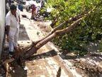 સુરતના કતારગામમાં રાત્રે પડેલા વરસાદ બાદ ઝાડ પડ્યું, પર્યાવરણ દિવસે જ વૃક્ષ કાપ્યાના સોસાયટીના રહિશો પર આક્ષેપ|સુરત,Surat - Divya Bhaskar