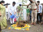 સુરત મહાનગરપાલિકા અને વન વિભાગ દ્વારા એક મહિનામાં બે લાખ તુલસીના રોપાઓનું વિતરણ કરાશે|સુરત,Surat - Divya Bhaskar